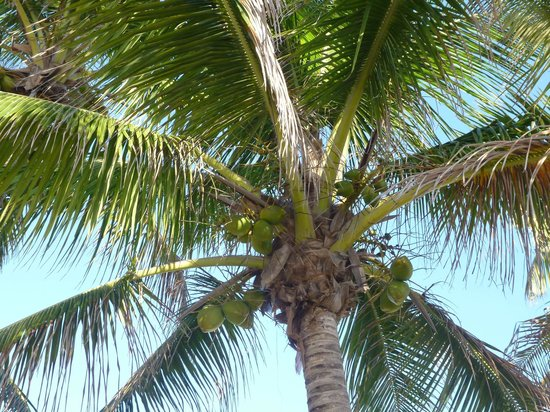Hollywood Beach Hotels: Palm down the street