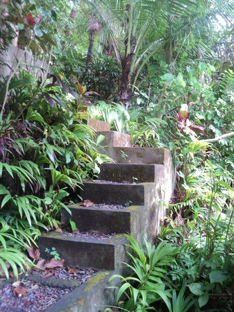 Jiwa Damai Organic Garden & Retreat : steps leading to lumbung
