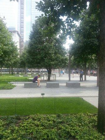 National September 11 Memorial und Museum: La forza dell'albero sopravvissuto