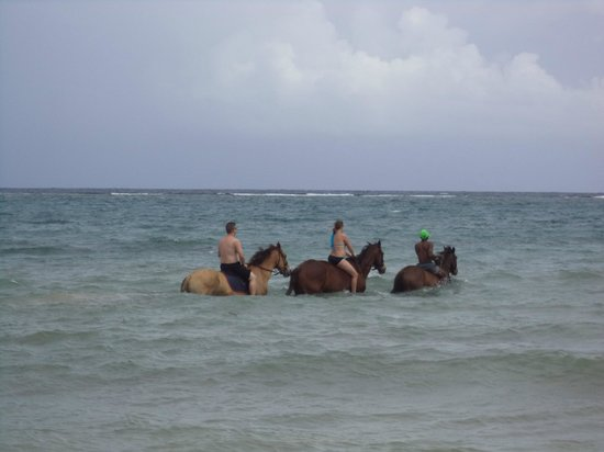 Jewel Paradise Cove Resort & Spa Runaway Bay, Curio Collection by Hilton : Hooves Horseback Riding