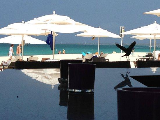 Bucuti & Tara Beach Resort Aruba : Sandbar