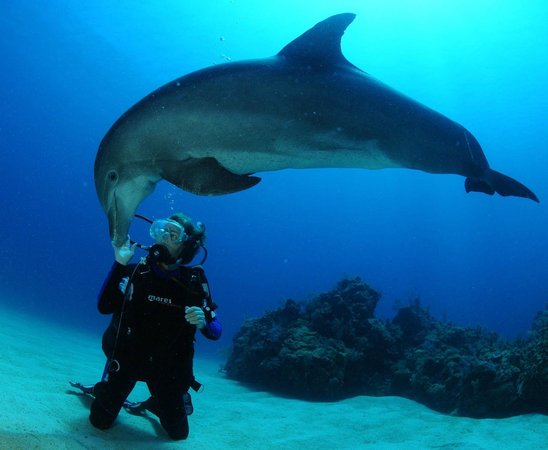 Roatan Institute for Marine Sciences - Anthony's Key Resort: Dolphin Dive
