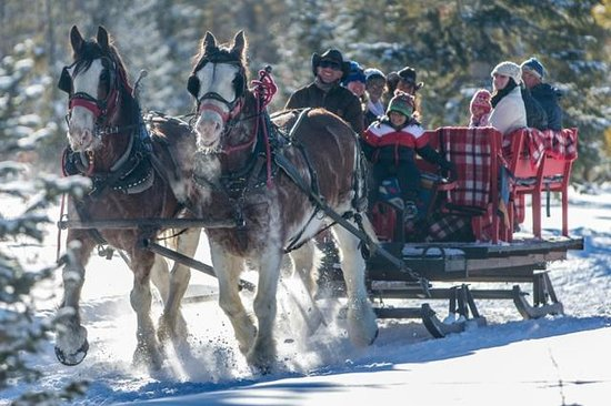 Sombrero Stables at Snow Mountain Ranch: Our medium sleigh, seats 10-12. Available for private groups.