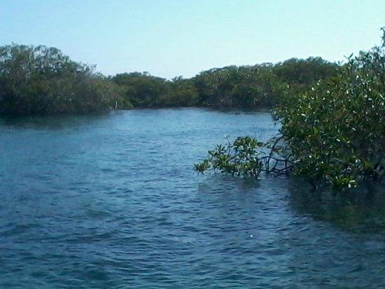 Concha de Perla: manglares