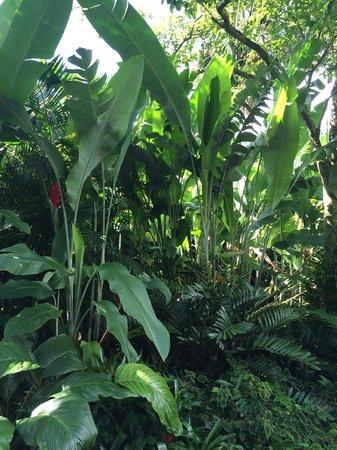Lyon Arboretum : Garden 1
