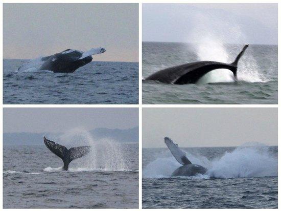 Red Dolphin Sailing Charters: You want whales... book Red Dolphin Charters