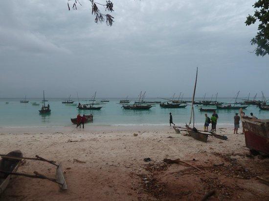 Uroa Bay Beach Resort: direction pour voir les dauphins