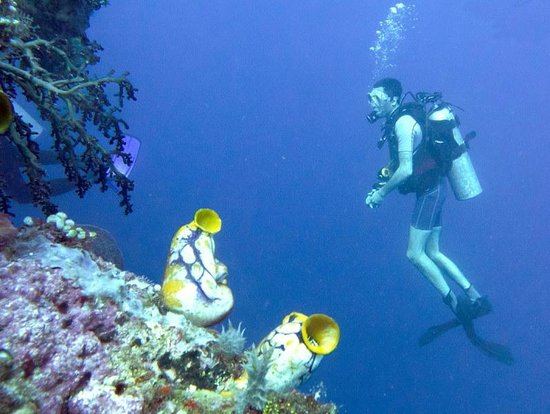 Thalassa PADI Dive Resort : rif
