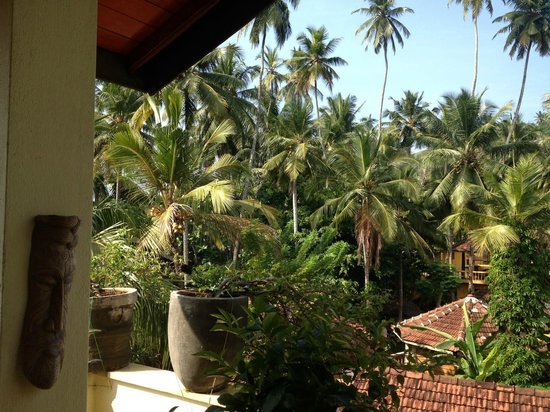 Palm Grove : View