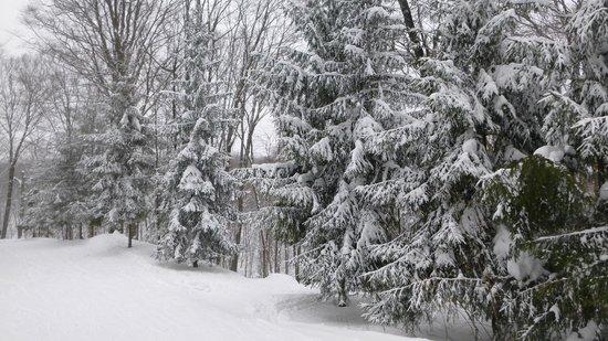 Boyne Highlands: lots of fresh snow