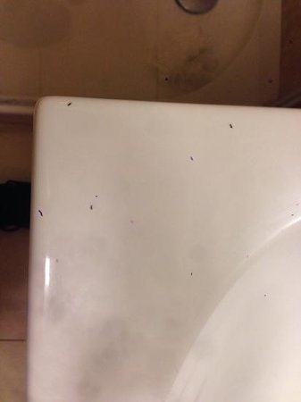 Kn Columbus Aparthotel: Ants on bathroom sink