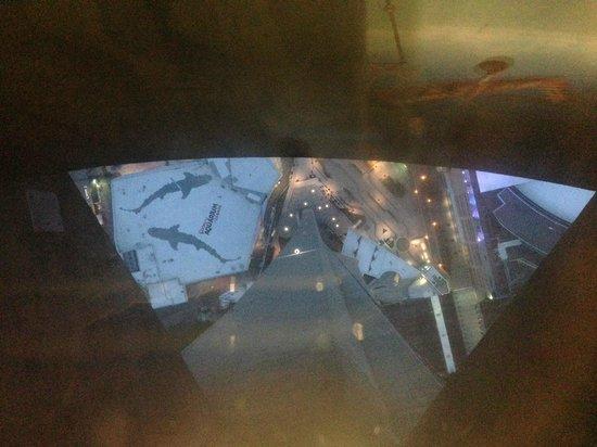 CN Tower: pavimento panoramico a vetro
