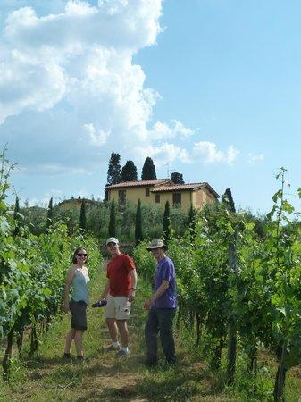 La Locanda Cuccuini di Cuccuini Stefano: The vinyard