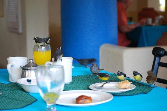 Jolly Beach Resort & Spa: Ospiti a colazione