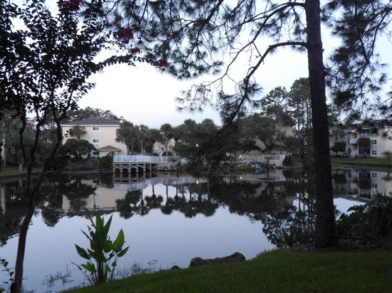 Sheraton Vistana Resort Villas- Lake Buena Vista : view from back of apt, Spa area block 10.