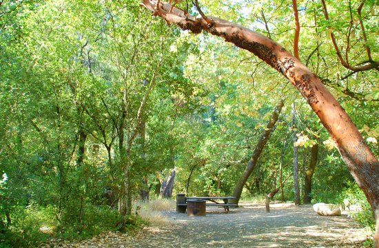 Bothe-Napa State Park
