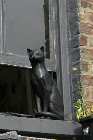 The Cat Gallery: This cat led me to the vegetarian restaurant!