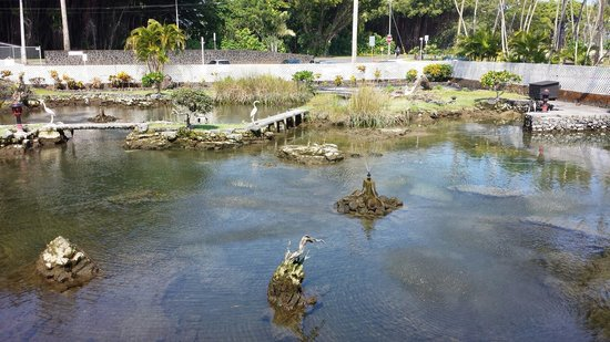 Hilo Seaside Hotel: Fish pond by the lobby