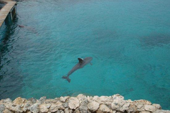 Dolphin Academy Curacao: Aquarium