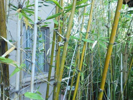 The Langham Huntington, Pasadena, Los Angeles: Bamboo in Japanese Gardens