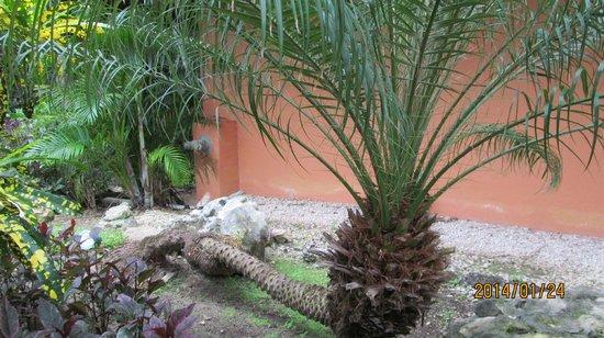 Grand Palladium Kantenah Resort & Spa : Magnifique verdure