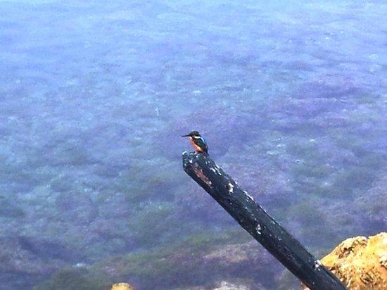 El Mouradi Port El Kantaoui: Un martin pêcheur !