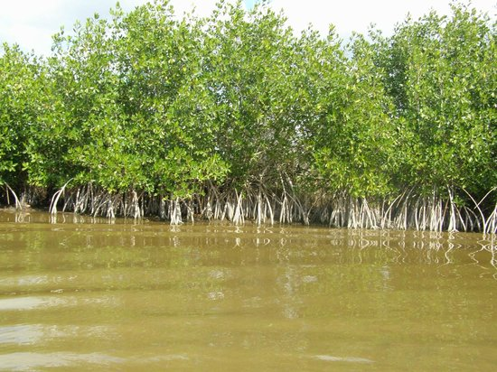 Capt Mitch's - Everglades Private Airboat Tours: Swamps