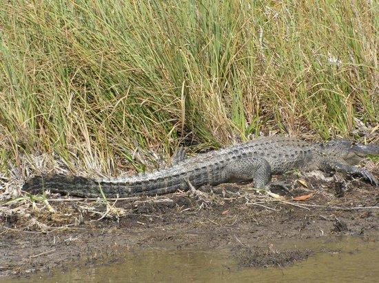 Capt Mitch's - Everglades Private Airboat Tours: There are plenty of them:)