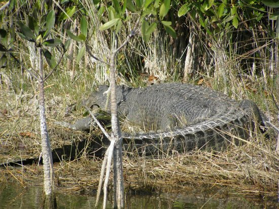 Capt Mitch's - Everglades Private Airboat Tours: Hello:)