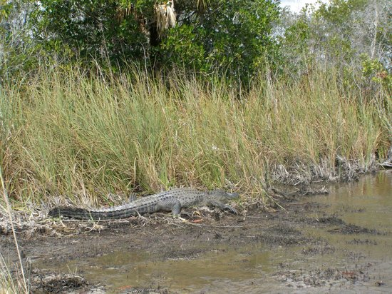 Capt Mitch's - Everglades Private Airboat Tours: Everglades residents