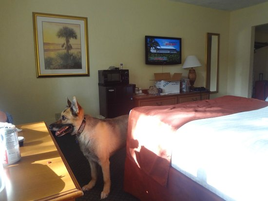 Best Western Crystal River Resort: Roxie waits for part of our Crackers takeout