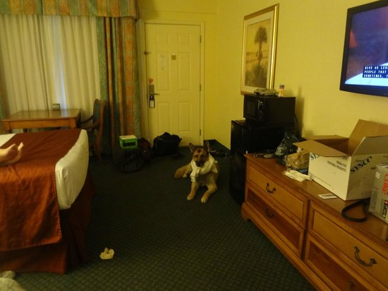 Best Western Crystal River Resort: big spacious rooms with microwave and fridge - hey thanks