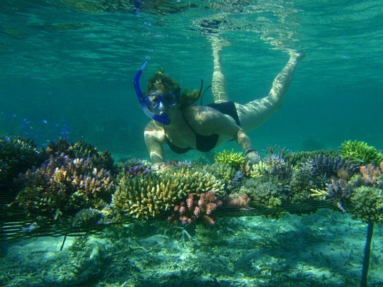 Leleuvia Island Resort : Snorkelling right off the beach