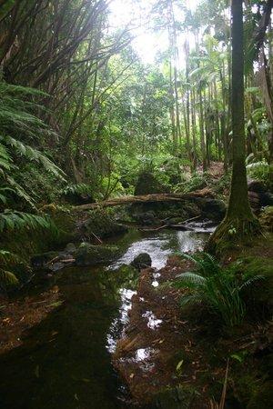Hawaii Tropical Botanical Garden: Beautiful creek
