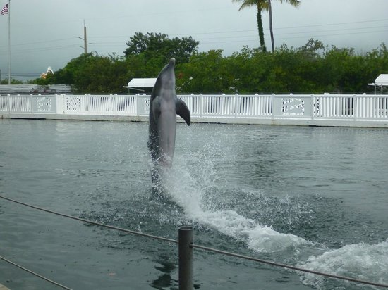 Theater of the Sea: Dolphin show