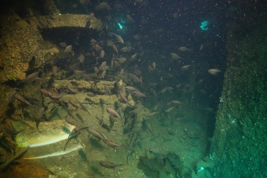 Paihia Dive: The Galley on the Rainbow Warrior Wreck.