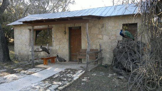 Mayan Dude Ranch : our cabin