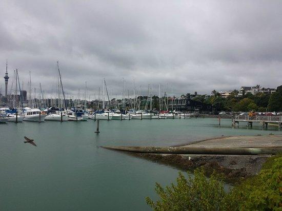 Absolute Tours - Day Tour: Vista desde la Marina al centro de Auckland