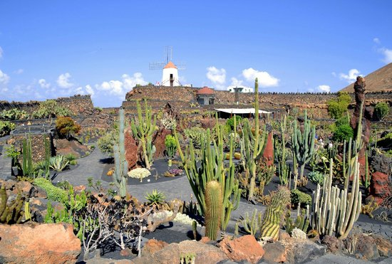 jardin de cactus lanzarote picture of jardin de cactus guatiza tripadvisor. Black Bedroom Furniture Sets. Home Design Ideas