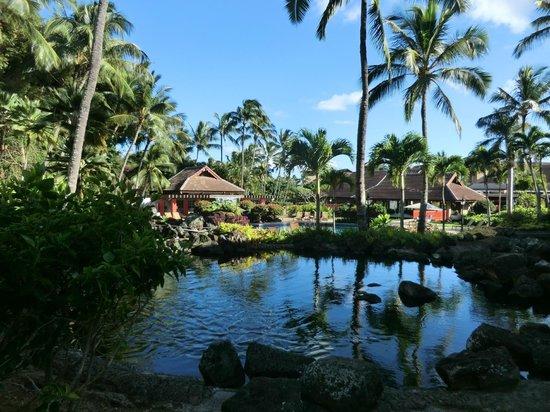 Sheraton Kauai Resort: pool for garden rooms
