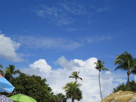 Lowdermilk Beach: the view over umbrellas and trees