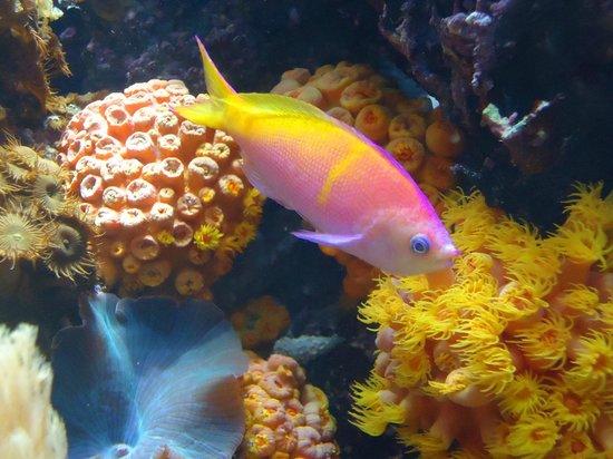 Shedd Aquarium: Wild Reef