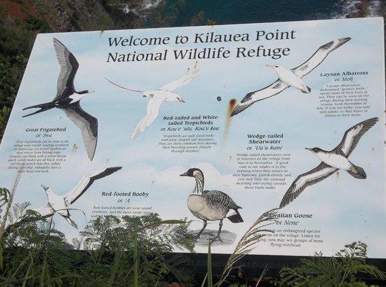 Kilauea Point National Wildlife Refuge: Information board at refuge