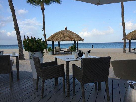 Bucuti & Tara Beach Resort Aruba : Outside Dining at Elements