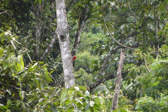 Le Gite d Indaiatiba: Pica-pau na árvore