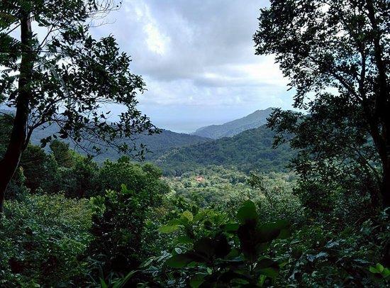 Reyno Day Tours: Morne Trois Piton National Park