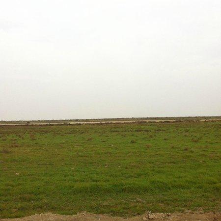 Dhi Qar Province, Irak: Western Dhi Qar 2013/14