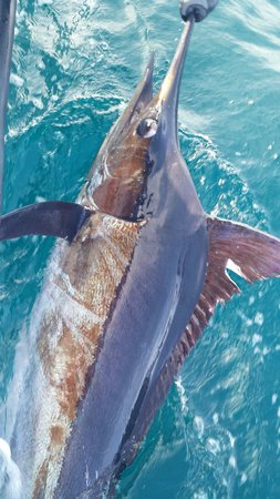 The Zancudo Lodge: Marlin