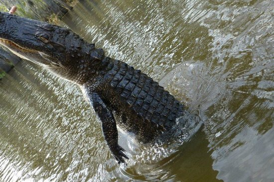Cajun Encounters: awesome experience