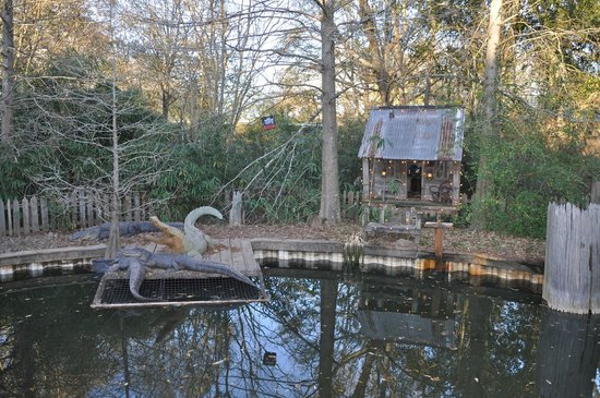 cute alligator enclosure Picture of Zoo Of Acadiana Broussard